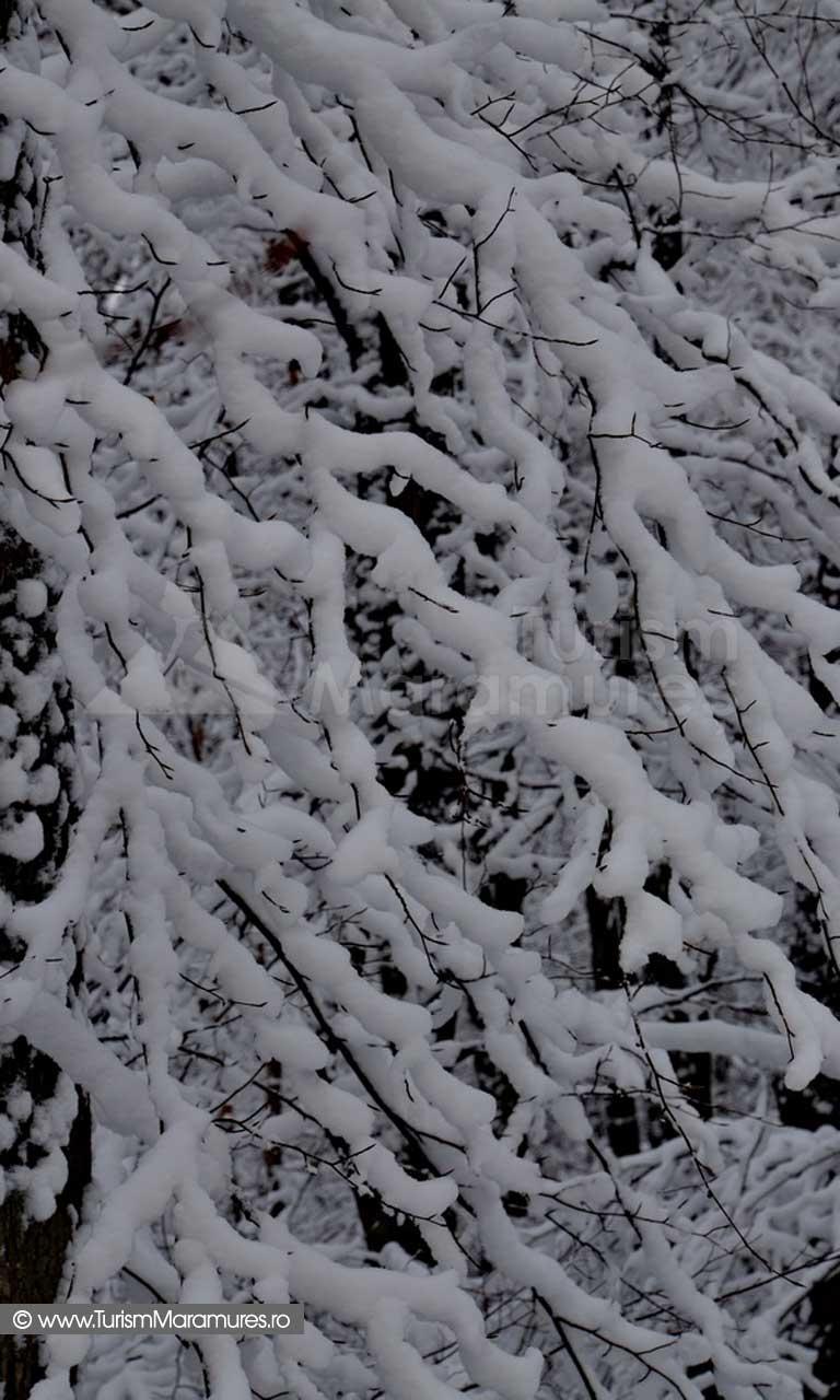 Iarna Maramures_03
