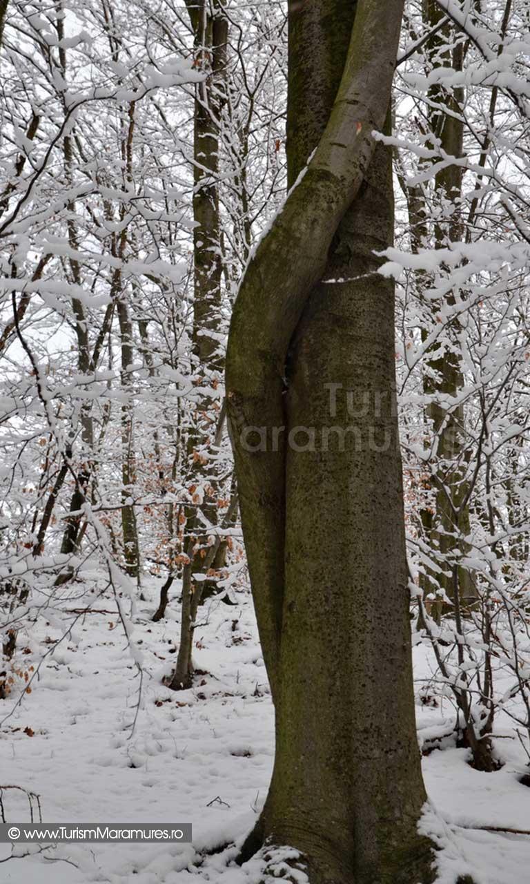 Iarna Maramures_04
