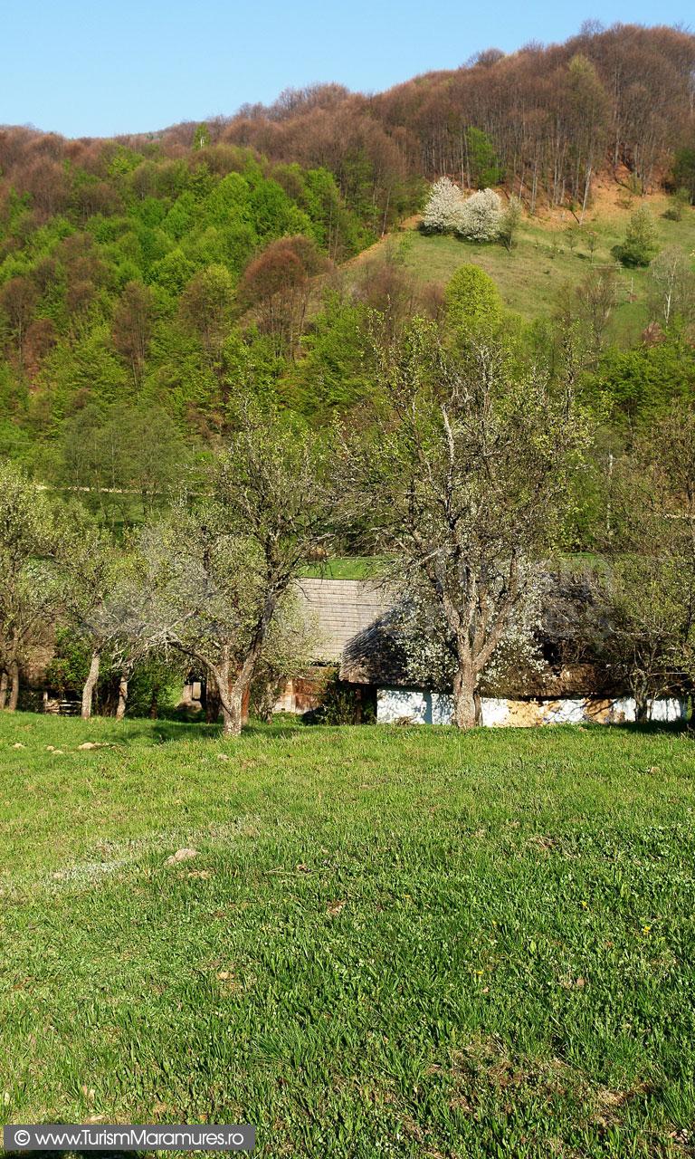 15_Izvoarele-Bloaja-Maramures