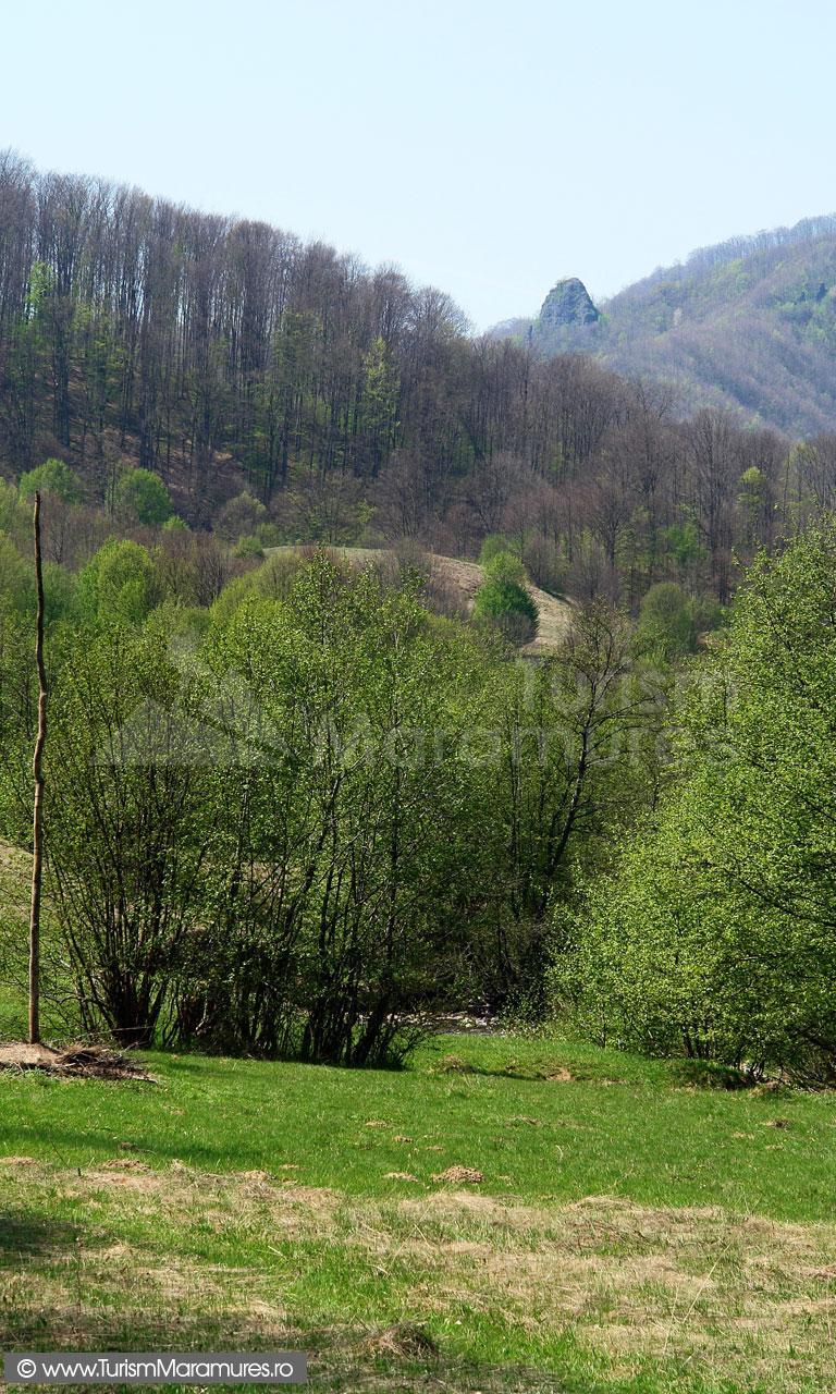 31_Bulbucul-din-Muntii-Lapusului