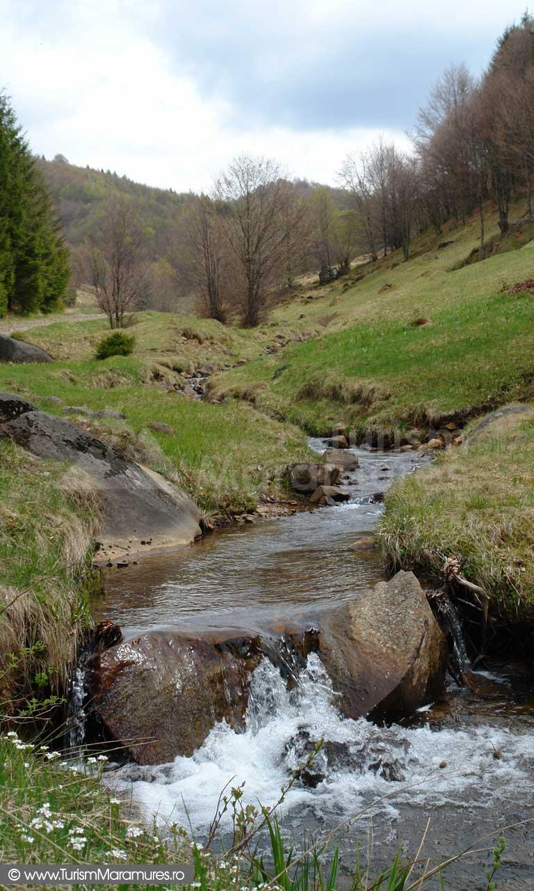 Valea Merchiului