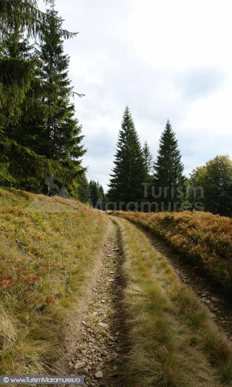 Drumul-dintre-Fagadau-Pintii-spre-poiana-Prisaca
