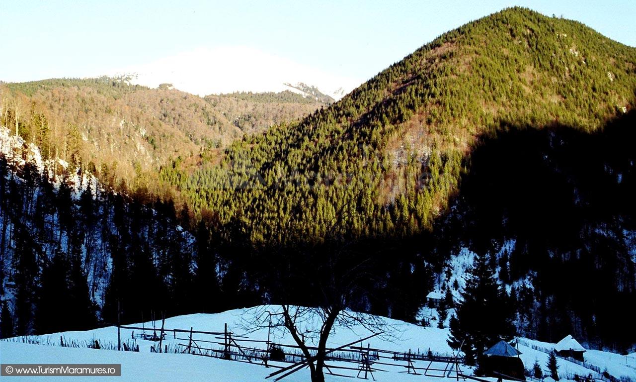 11-Pichetul-Smereceni-de-pe-valea-Repedea-Turism-Maramures