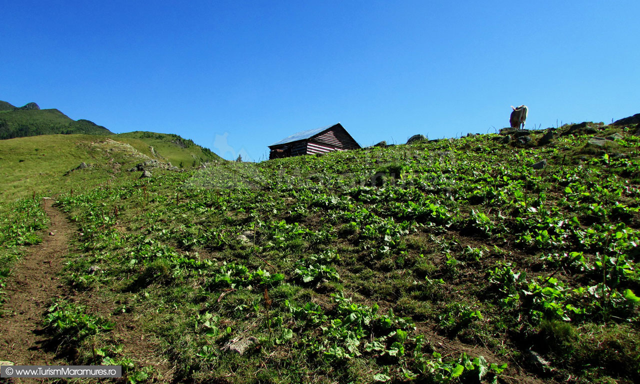 28_Casoaia-stinei-II-de-pe-Muntele-lui-Serban