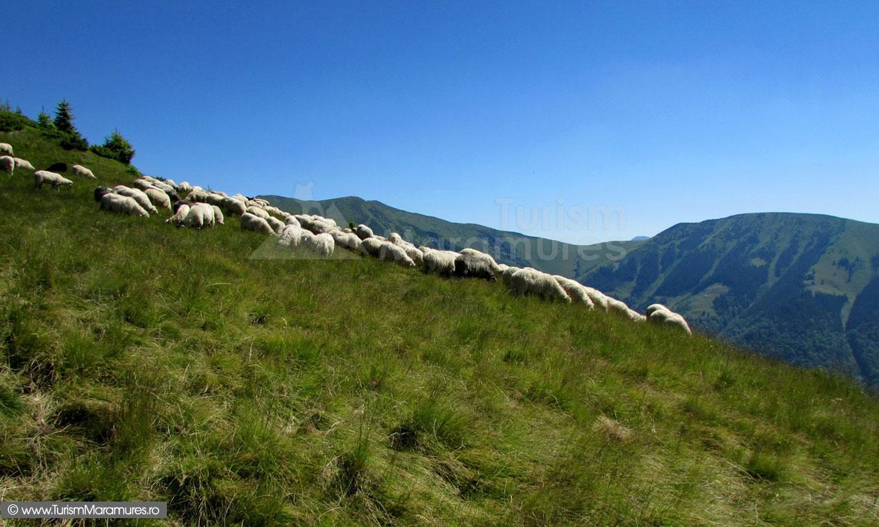 30_Vedere-spre-Culmea-Pop-Ivan
