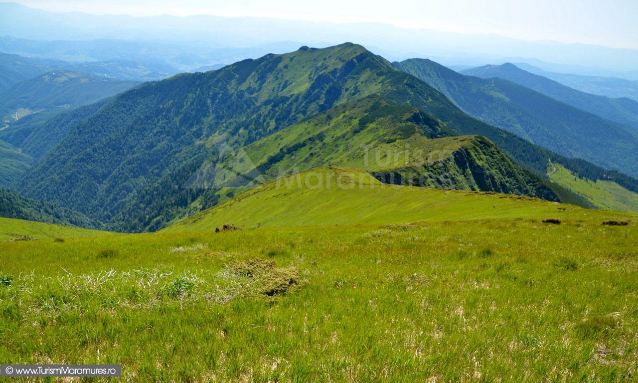 54_Muntele-lui-Serban_Muntii-Maramuresului