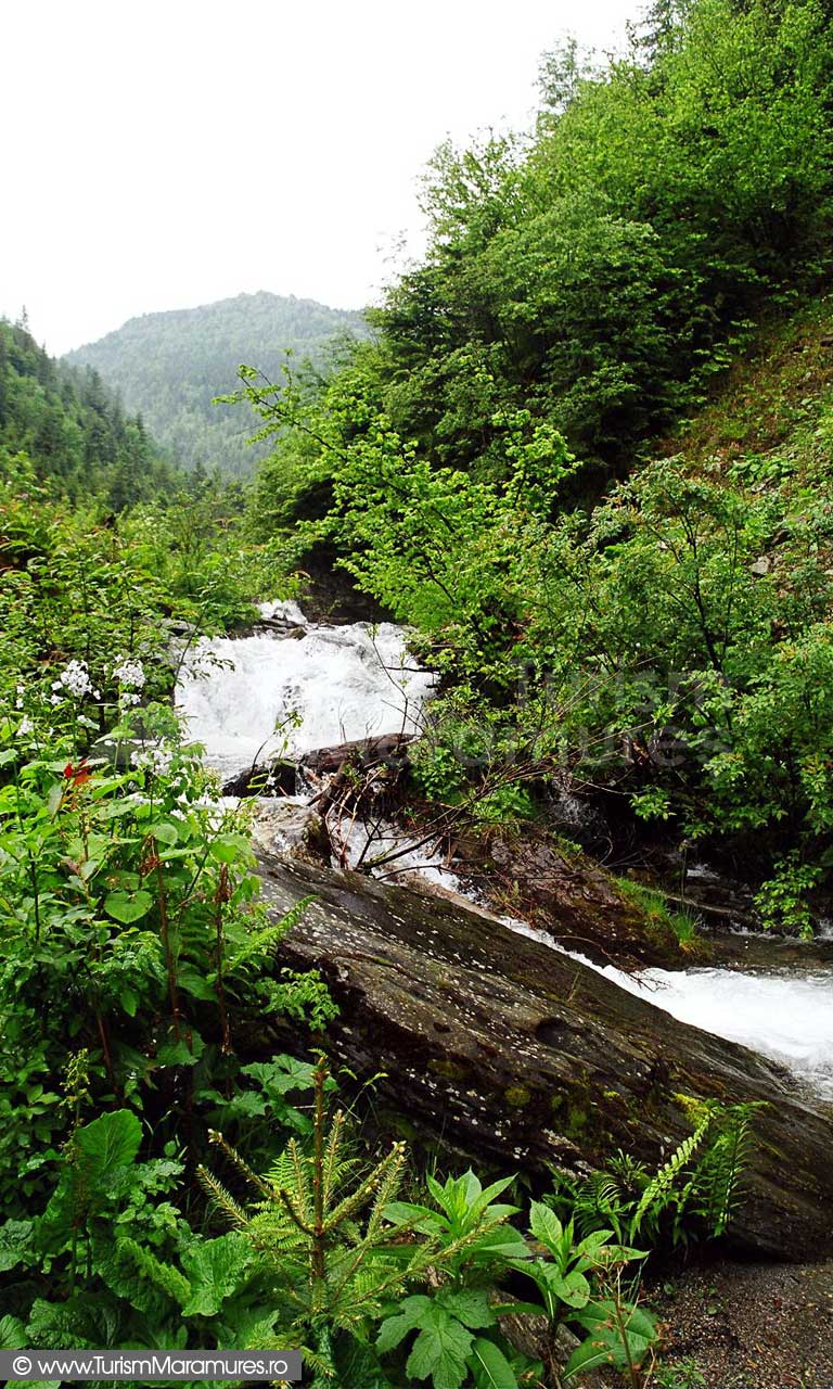 Valea-Negoiescu_Muntii-Rodnei