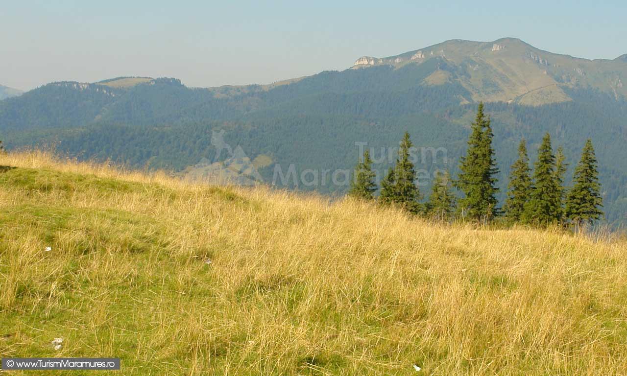20_Cearcanu-si-Podu-Cearcanului-din-Muntii-Maramuresului