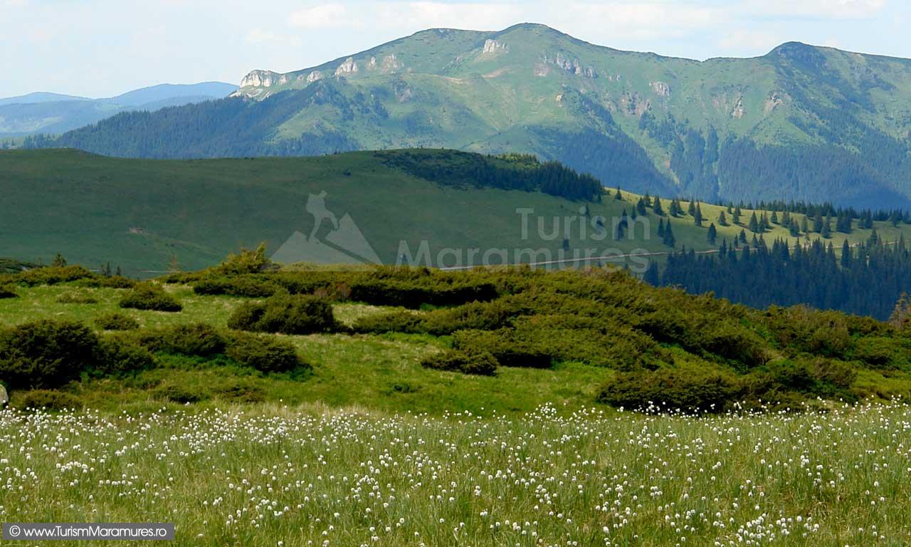 Parcul-Natural-Muntii-Maramuresului_Varful-Cearcanu