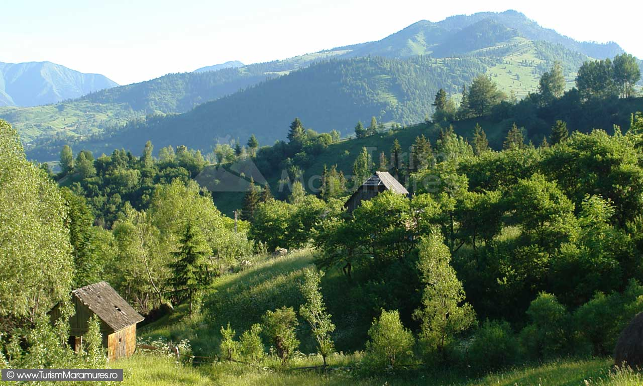 Varful-Magura_Parcul-Natural-Muntii-Maramuresului