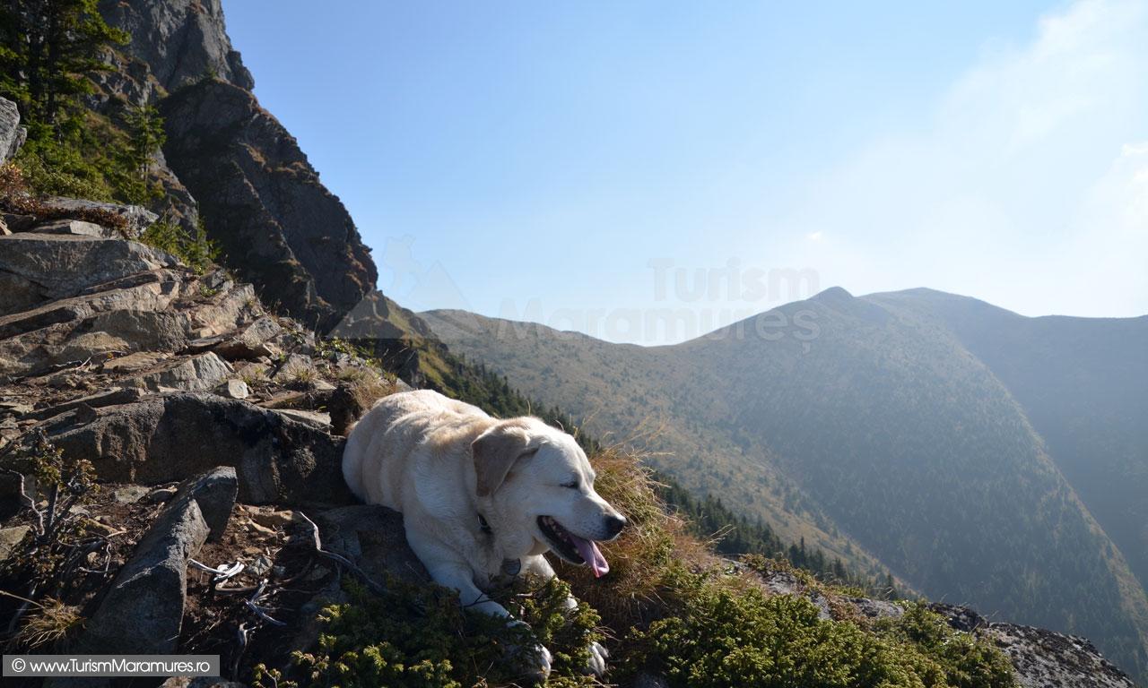 21_Labrador-in-excursie