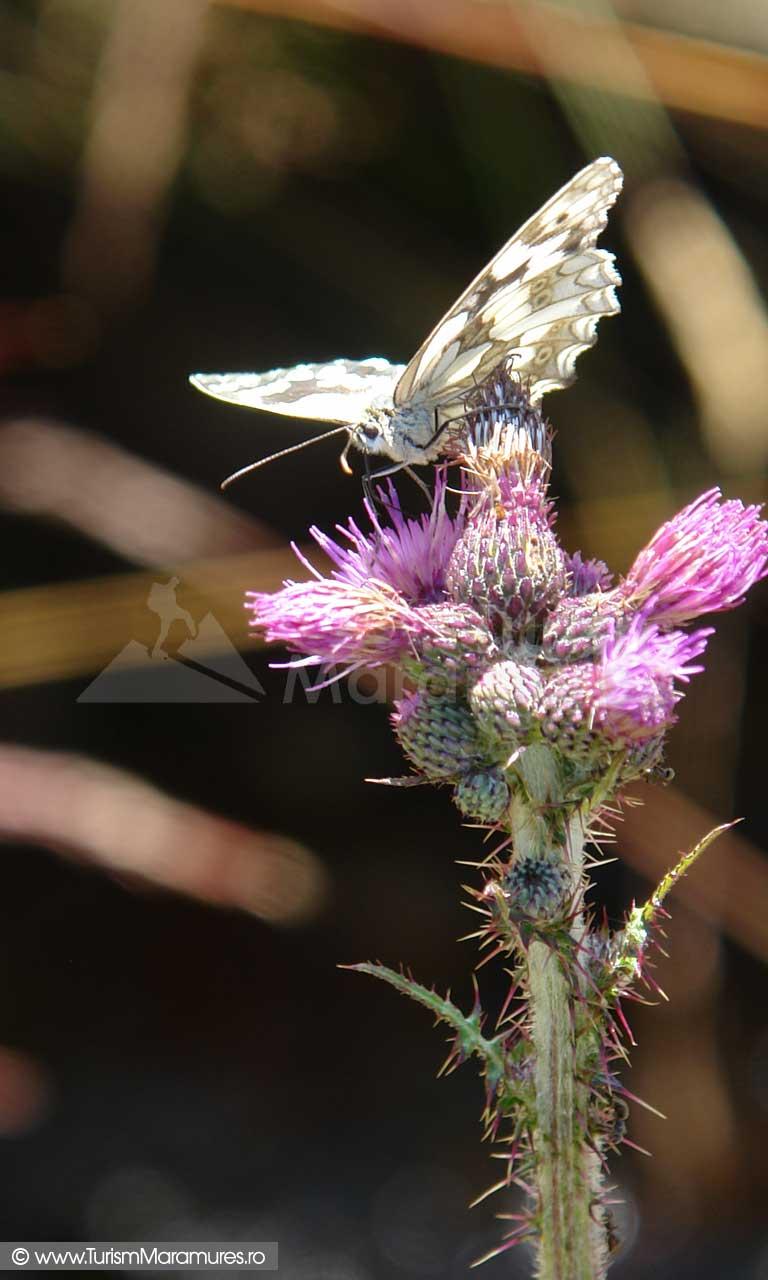 44_Fluture