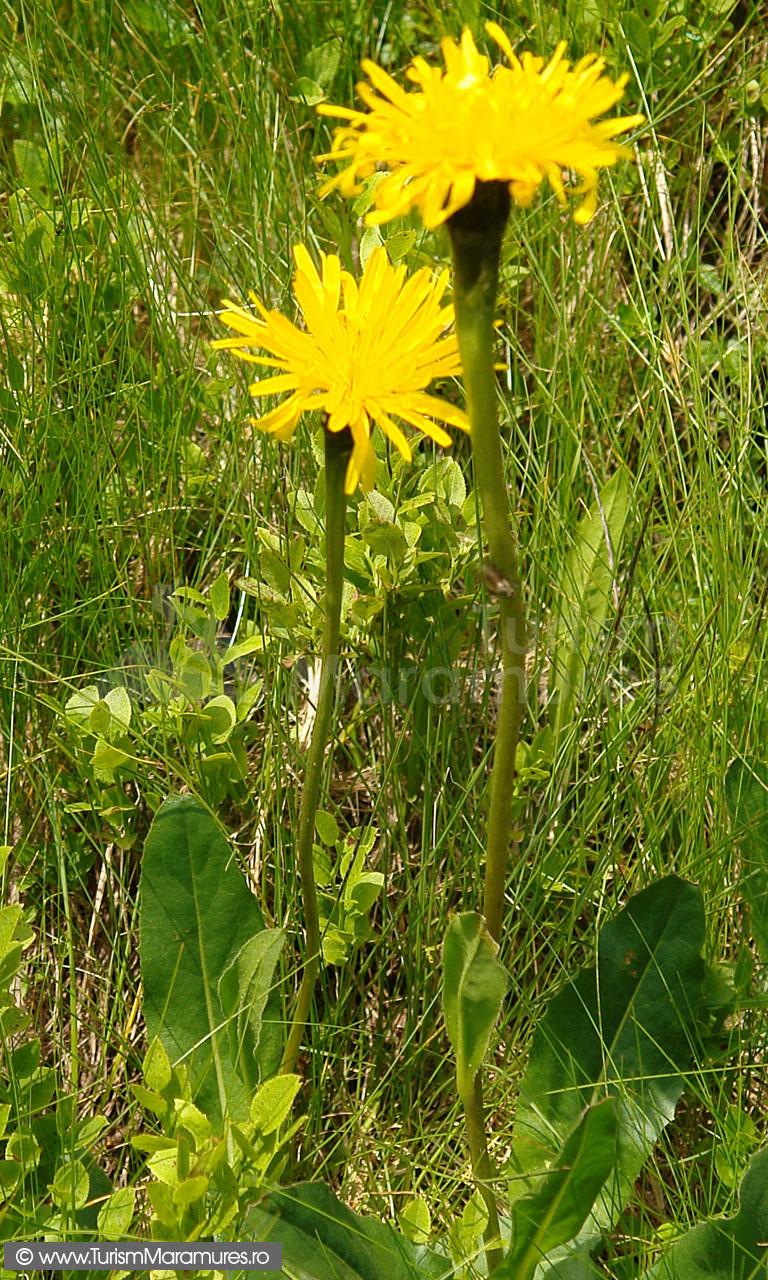 51_Flori-alpine