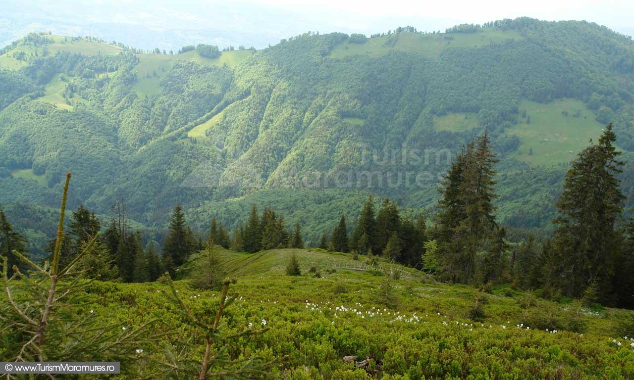 20_Parcul-Natural-Muntii-Maramuresului