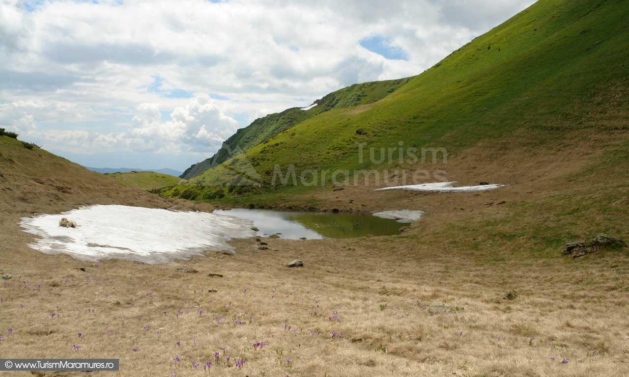 48_Vartopu-Mare-Muntii-Maramuresului