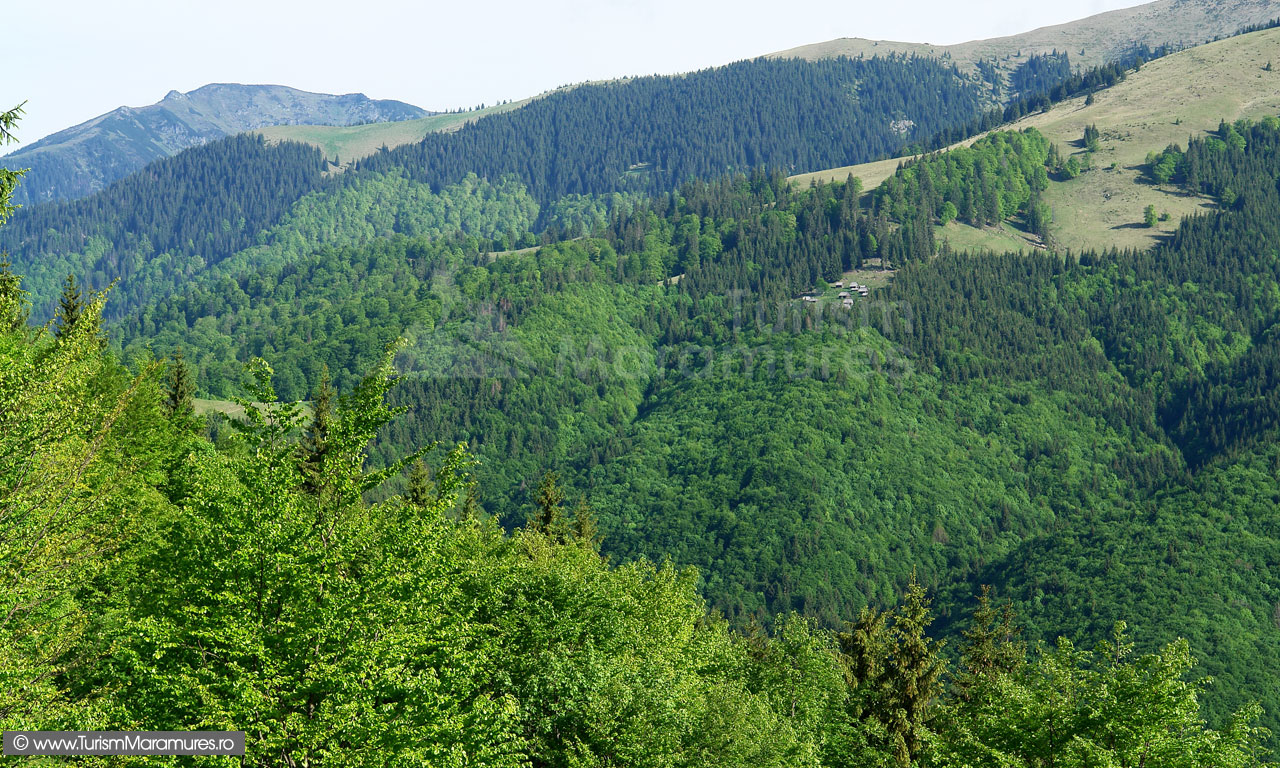 15_Stanga-Muntele-lui-Serban
