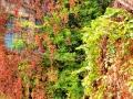 09-Impresii-autumnale