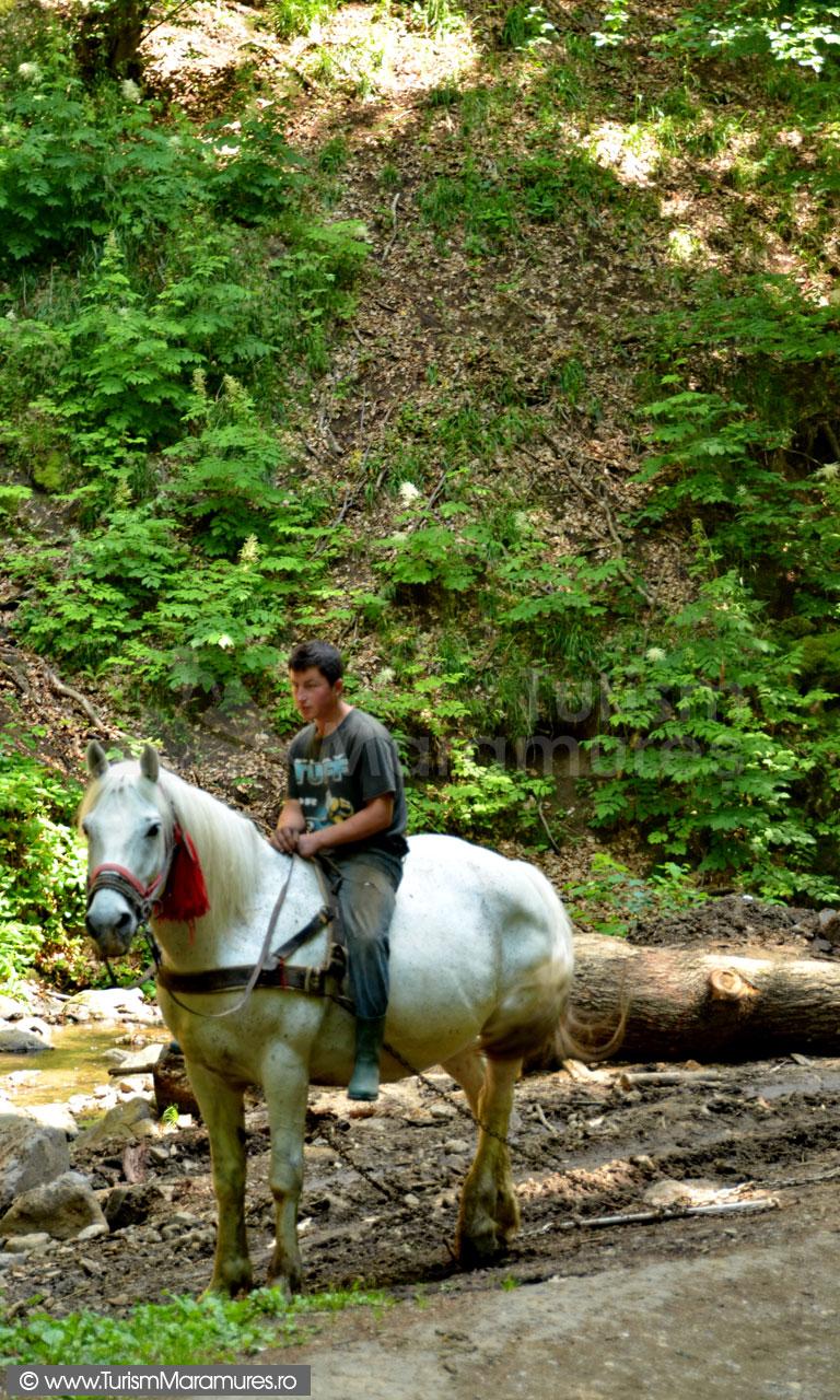 0212_Tras-busteni-cu-calul_Valea-Borcutului_Baia-Mare