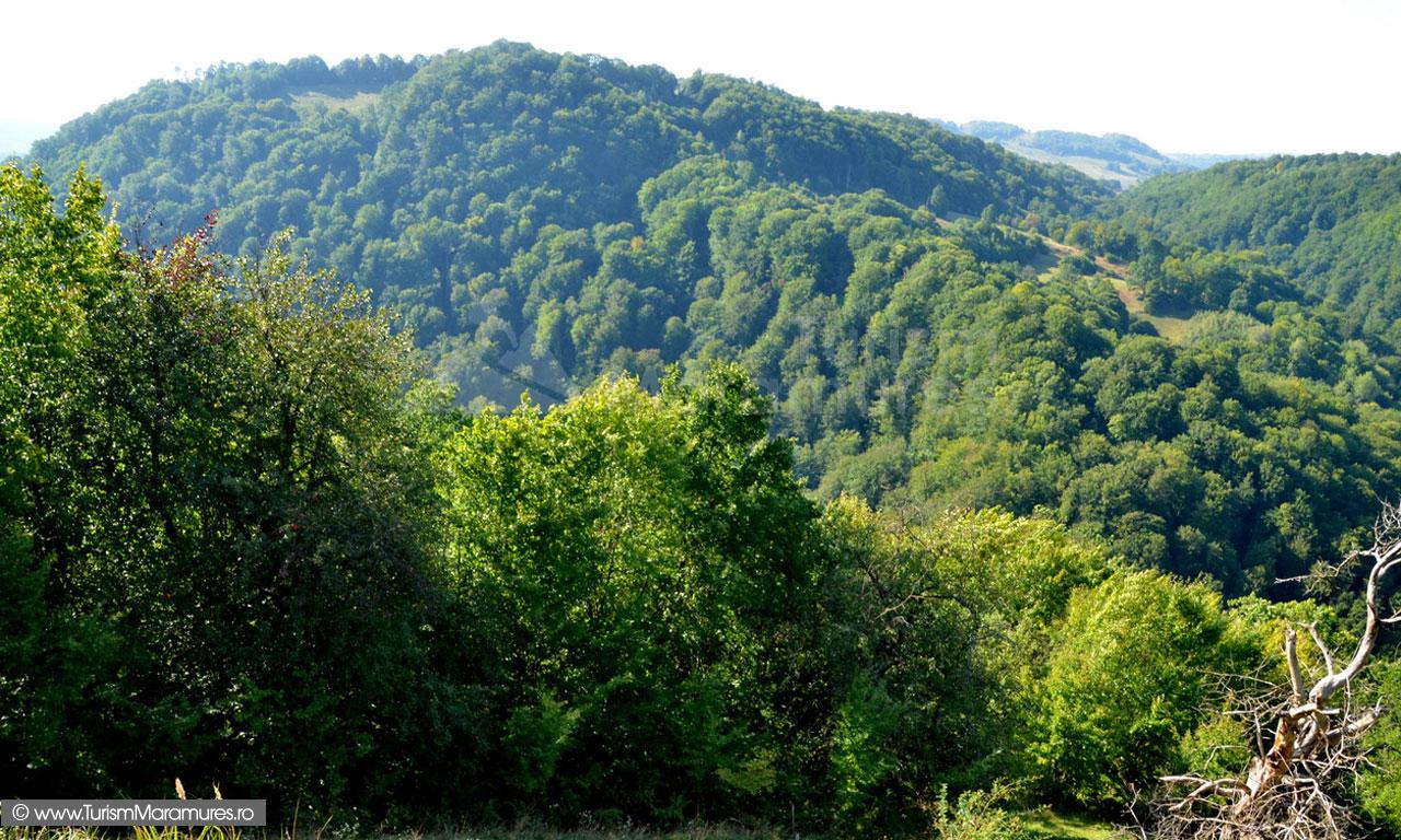 52_Dealul-Plopis-Maramures