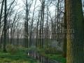 16_Stejar-pedunculat_Quercus-robur