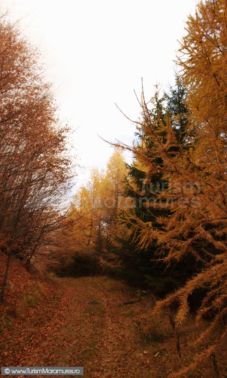20_Drumul-pe-la-poale-Ignis-spre-Groape