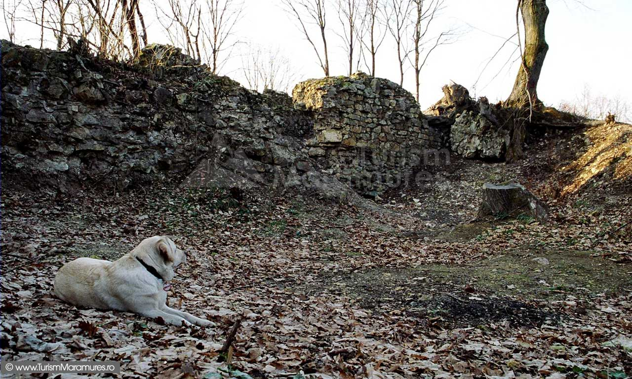 Ceteatea-Seini-ruine