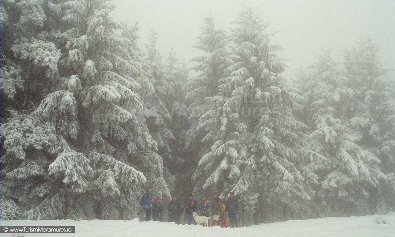 Dealul-Comja,-iarna