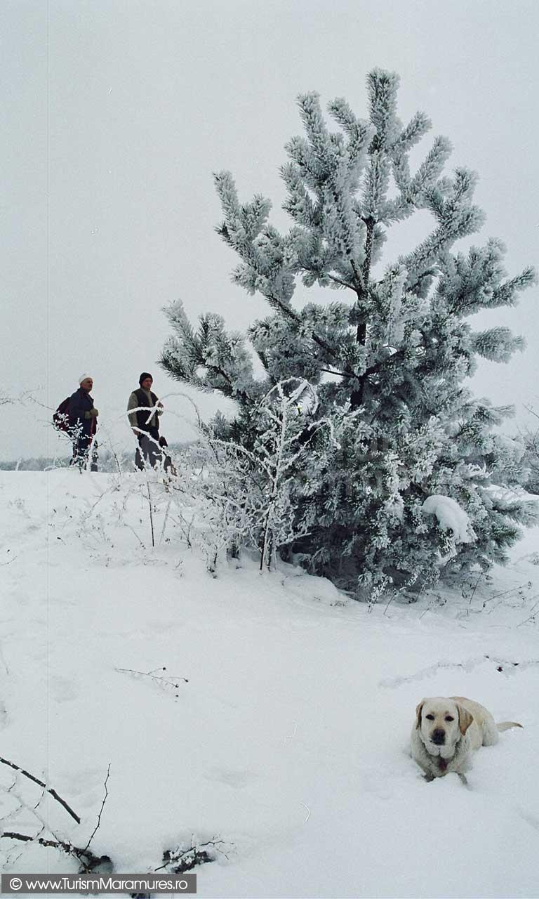 Tara-Chioarului-Maramures-iarna