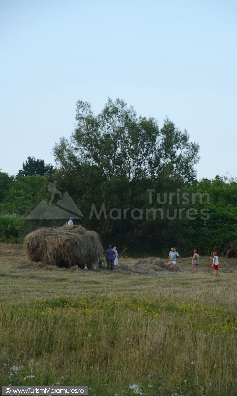 0070_Stransul-fanului-in-Maramures