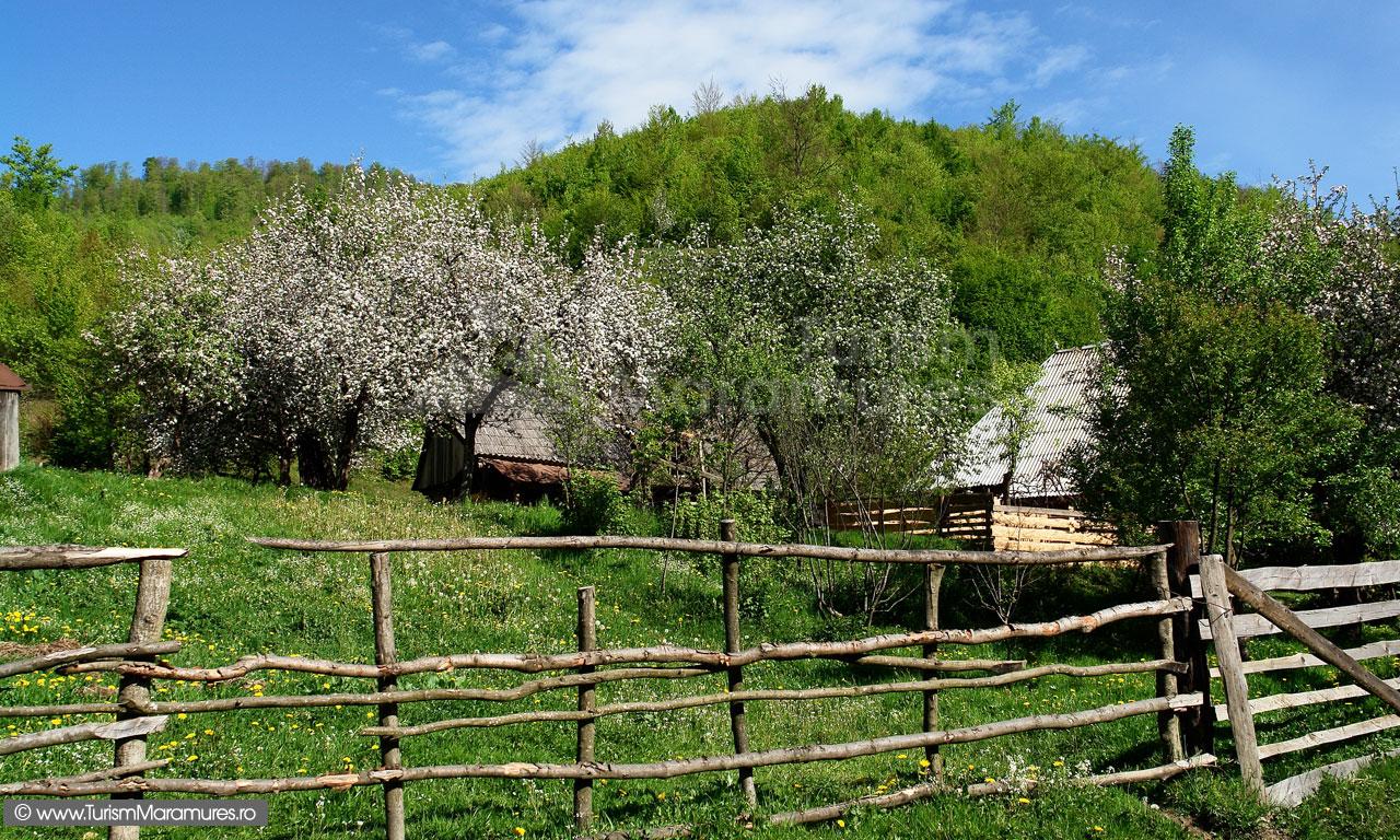 26_Casa-din-Poiana-Botizei-Maramures