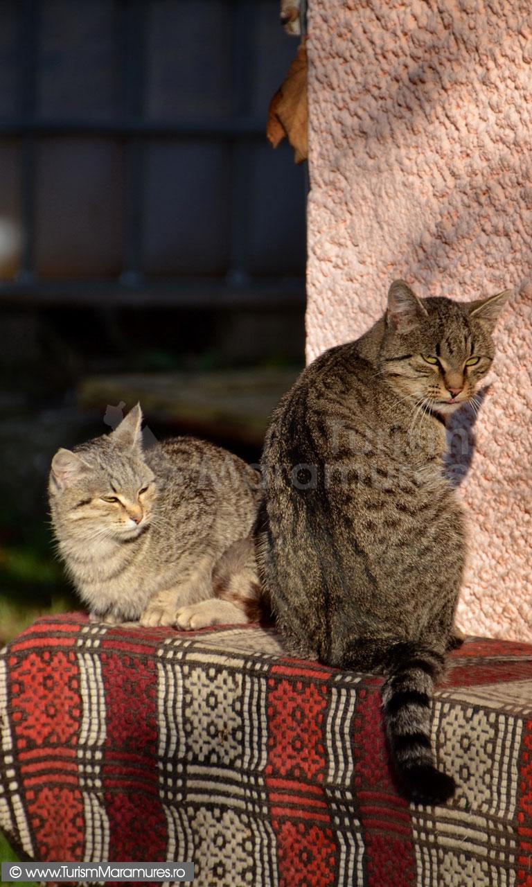 19_Pisici