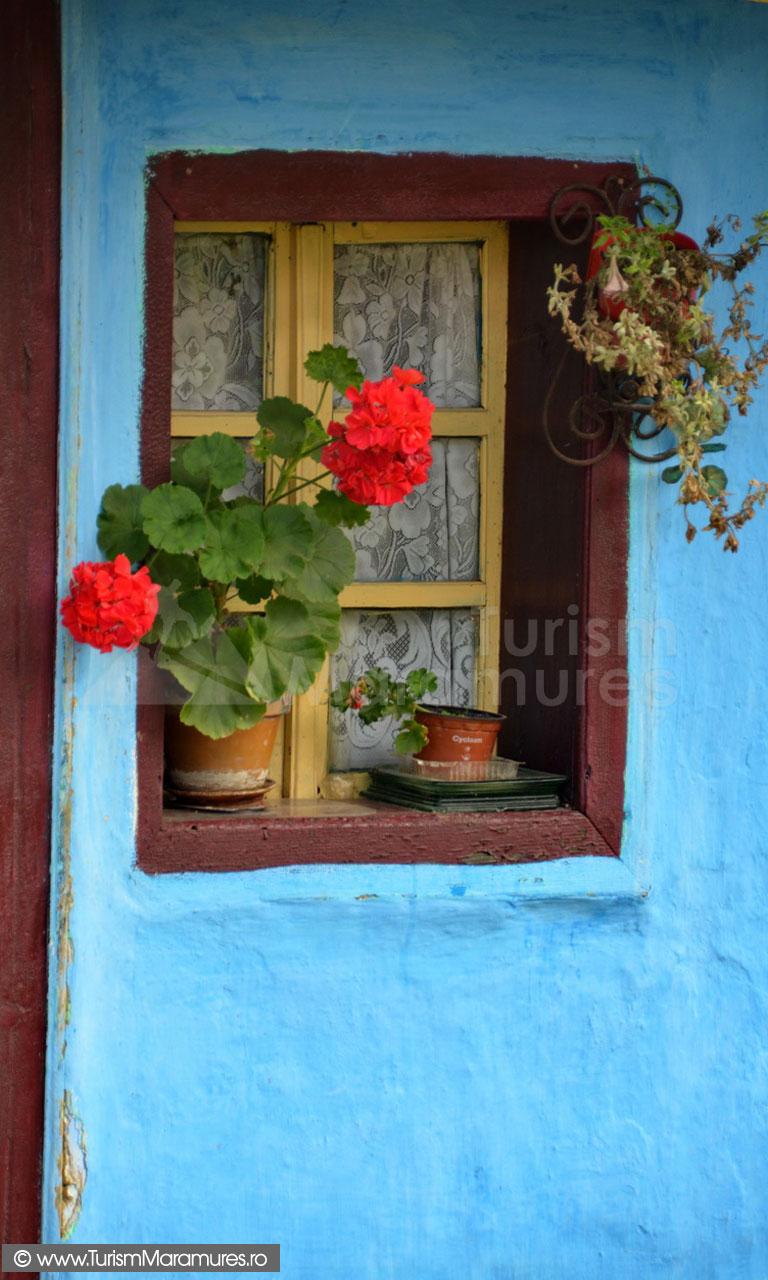 81_Muscata-la-fereastra