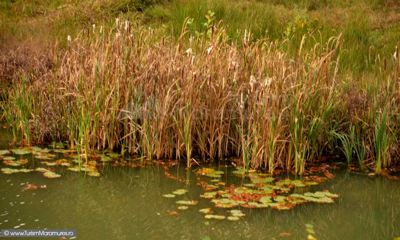 Papuris-pe-Lacul-Nistru