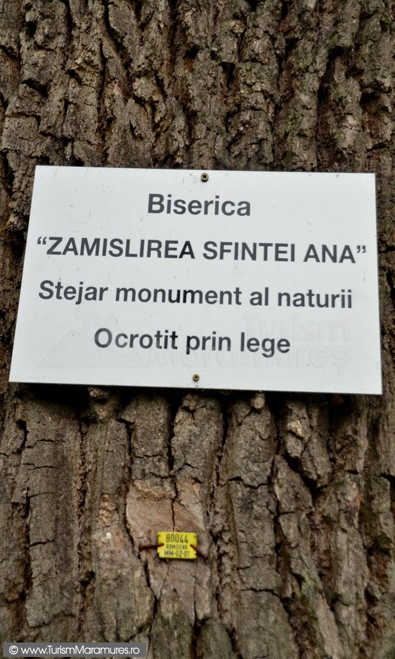 0156_Stejarul-monument-al-naturii-Coruia-Maramures