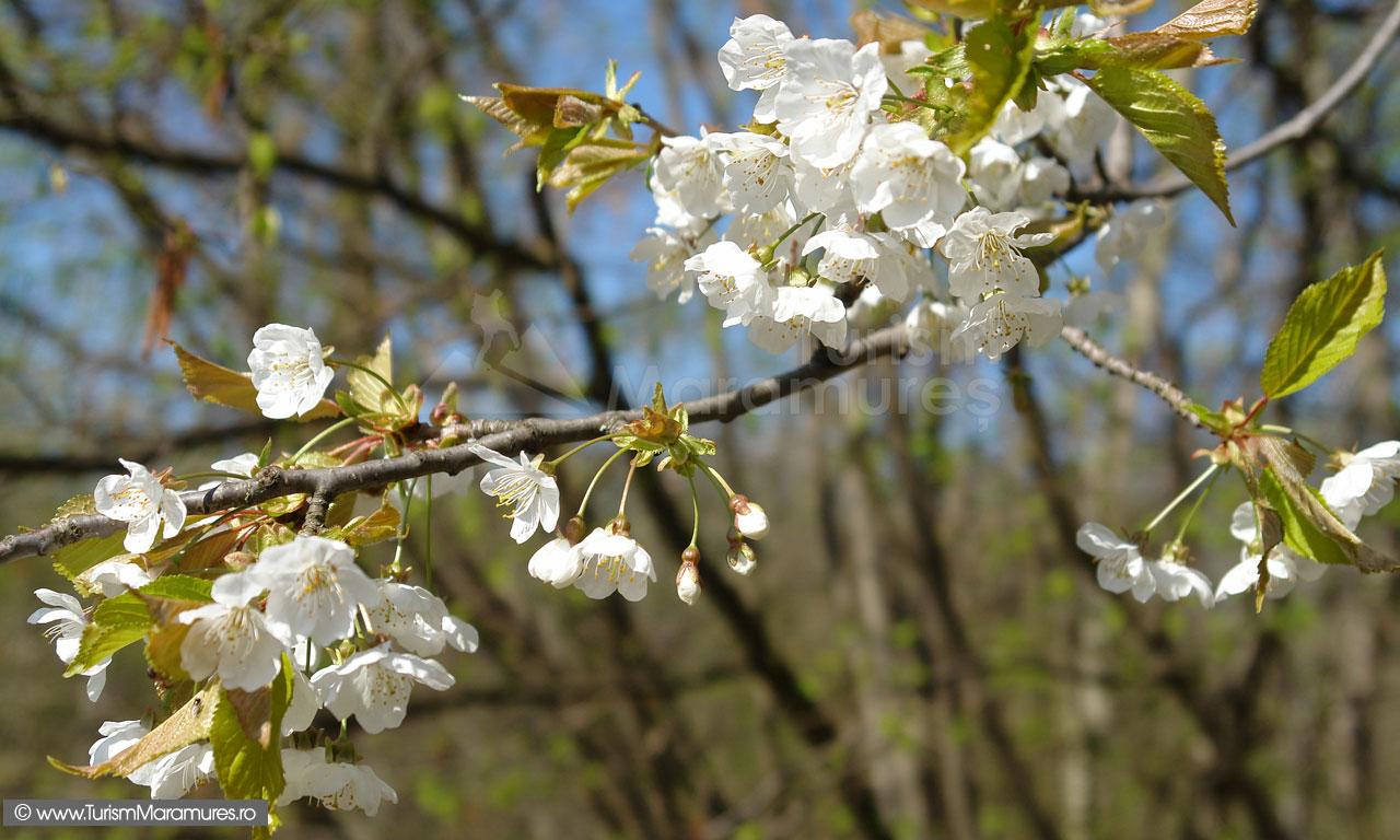 36_Flori-de-cires