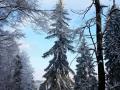 13-Saua-Dia-iarna