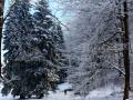 14-Saua-Dia-brazi-iarna