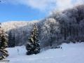 15-Saua-Dia-feerie-iarna