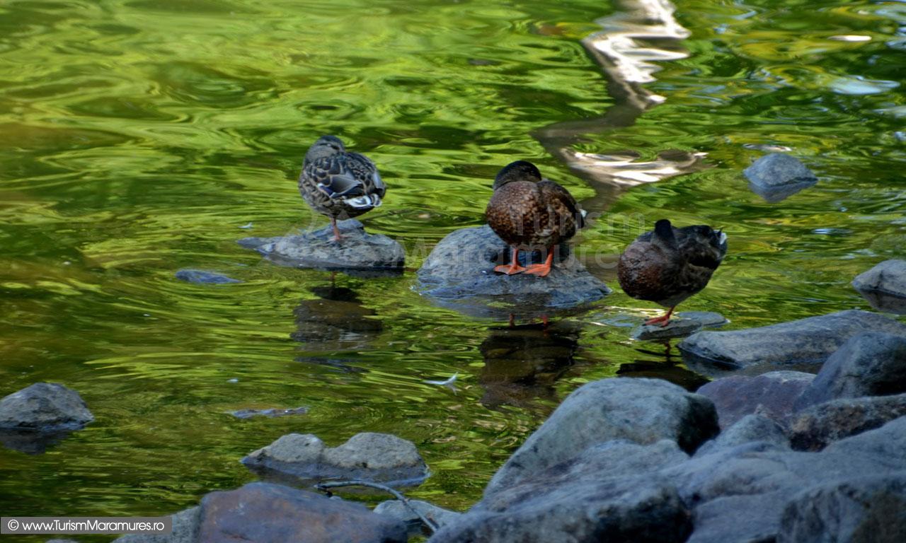 40_Rate-salbatice-pe-Lacul-Mogosa