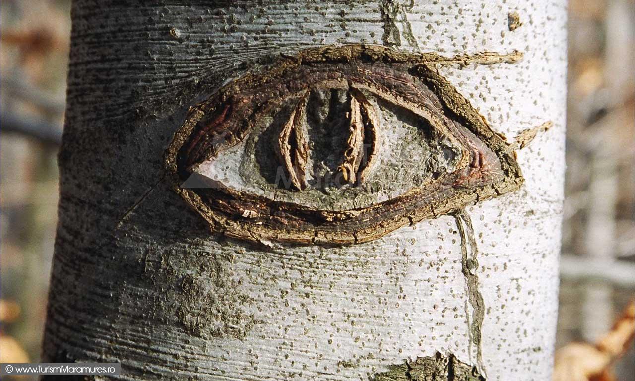 Ochi pe trunchi de copac