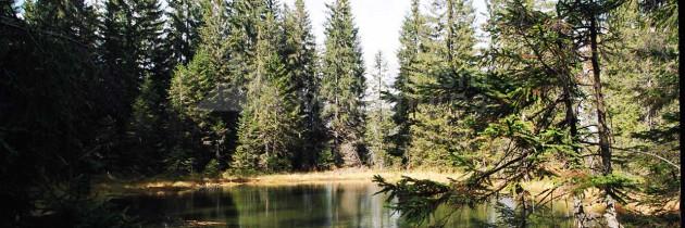 Munții Lăpușului (Băiuț): Pe vârful Văratec și la Tăul Văratecului