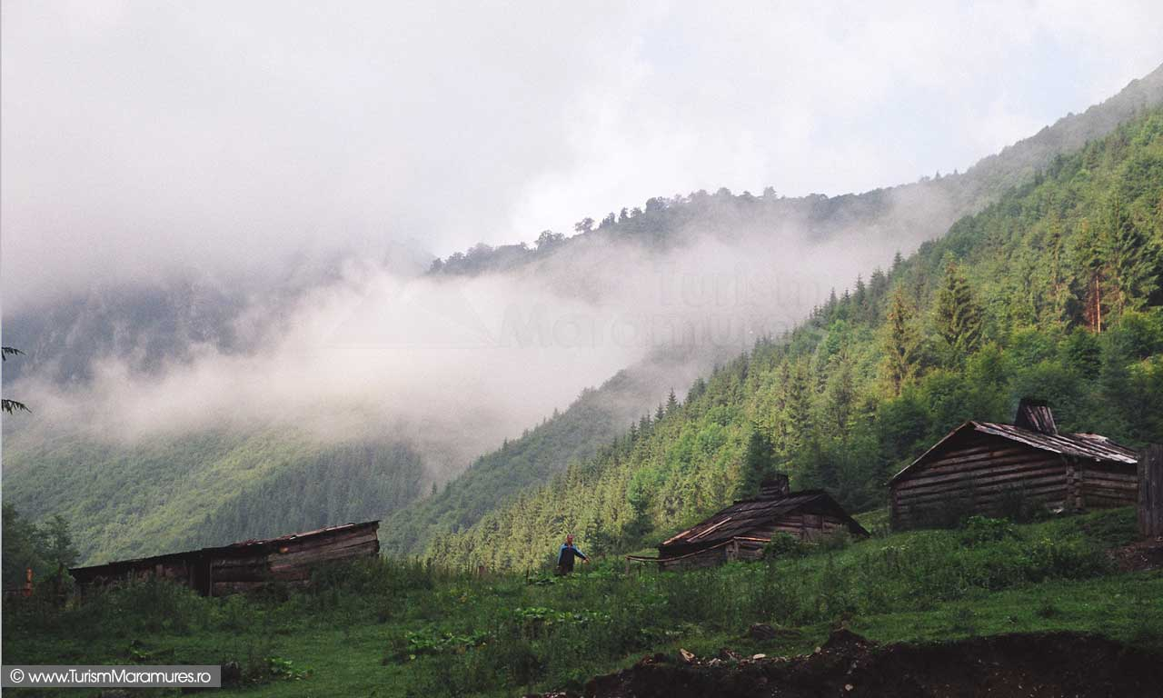 Vacariste pe Valea Socolau