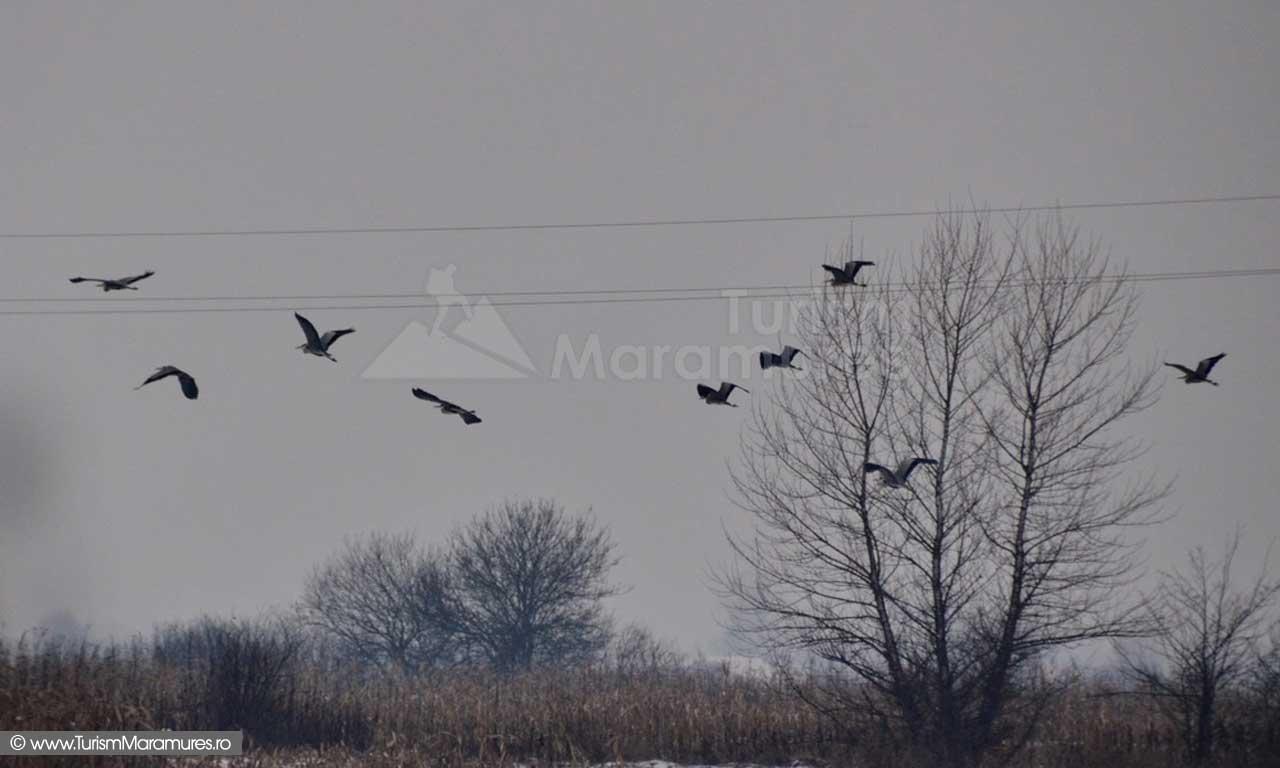 Starci si egrete deasupra raului Lapus