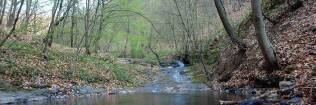 Munții Igniș (Firiza): Valea Vicleanu Mare – Lacul Bodi – vârful Strâmba – Piatra Șoimului – Șaua Dia – Pleștioara – Măgura Băi – Piatra Virgină