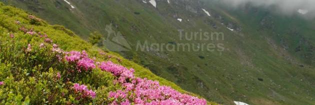 Parcul Național Munții Rodnei: Cascada Cailor – Podu Cailor – valea Cimpoiasa – Borșa Fântâna