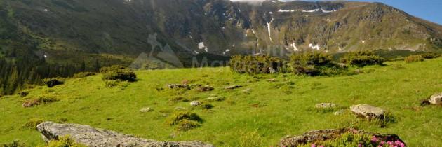 Munții Rodnei: Tura la rododendron și gențiene în Parcul Național Munții Rodnei prin Pasul Prislop – Șaua Stiol – vârful Oncului, vârful Gărgălău – Tăul Știol