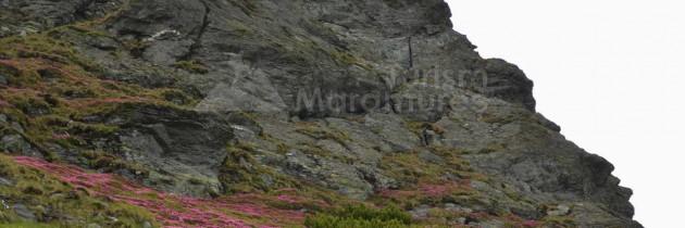 Munții Rodnei: Din Borșa Pietroasa pe Piatra Albă, Corhele Pietrosului și Pietrosu Rodnei cu retur pe la Tăul Iezer