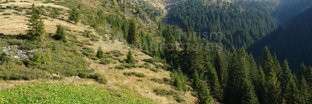 Munții Țibleș: Vârful Țibleș și vârful Bran abordate dinspre Zagra – Poienile Zagrei – Suplai