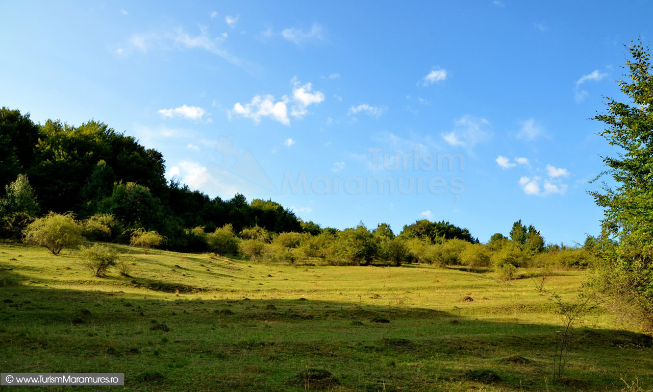 Poiana sub dealul Pietranu