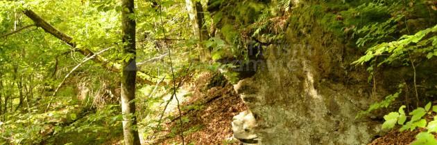 În Defileul Lăpușului, din Dâmbu Pițigăi, prin Săhelbe, cu retur prin Sălhuța